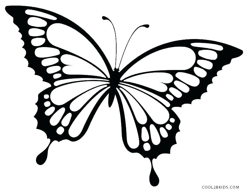800x620 Butterfly Templates To Print Butterfly Printable Coloring Pages