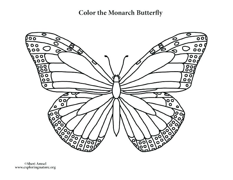 792x612 Free Monarch Butterfly Coloring Sheets Simple Pages Outline Free