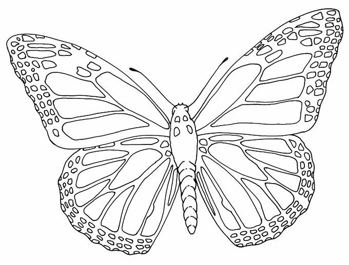 680x517 Insect Coloring Page Butterfly Outline Tattoos Butterfly