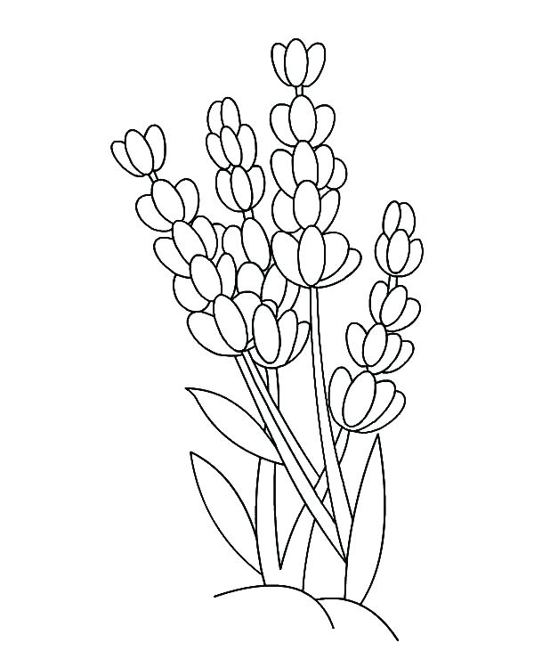 600x731 Outline Coloring Pages Butterfly Outline Colouring Page To Color