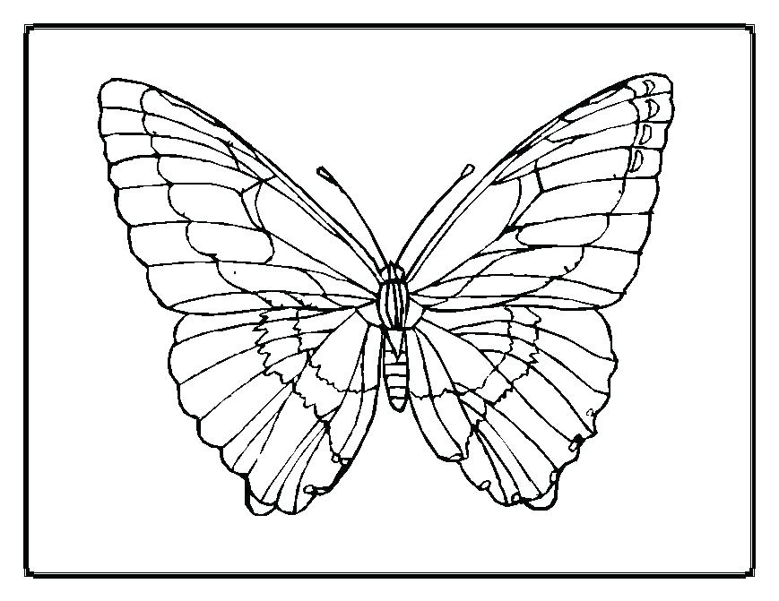 869x671 Outline Of A Butterfly To Color Sample Butterfly Documents