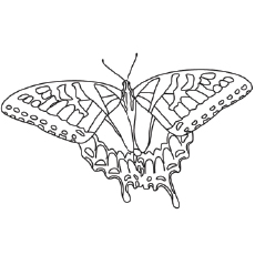 230x230 Top Free Printable Butterfly Coloring Pages Online