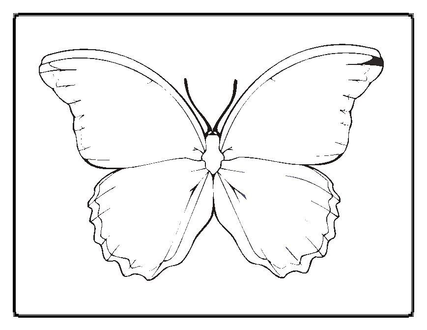 869x671 Blank Butterfly Coloring Pages Butterflies