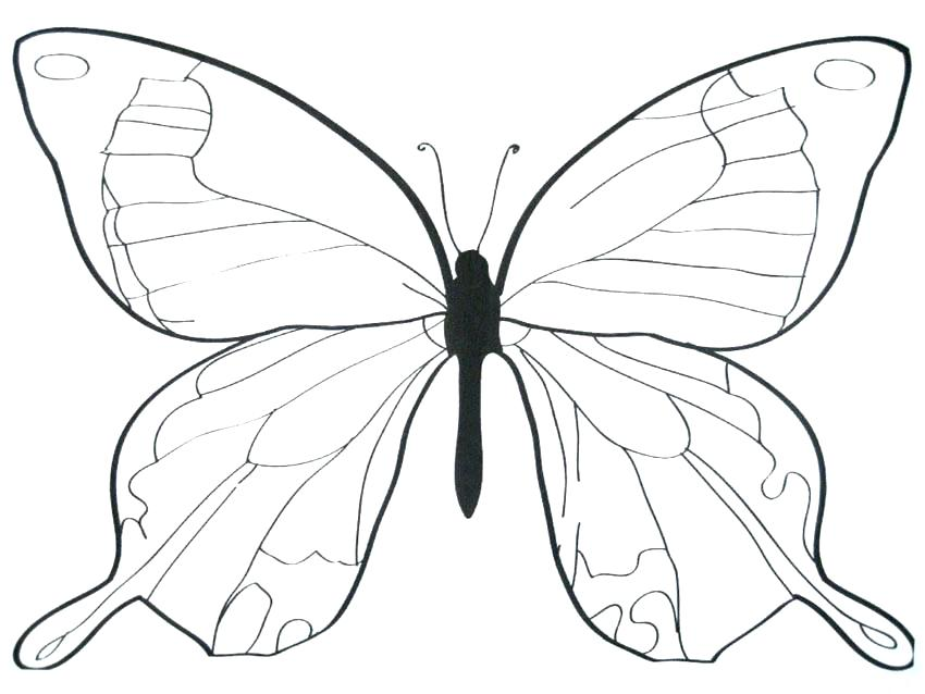 850x638 Butterfly Blank Outline Kids Coloring Butterfly Wings Coloring