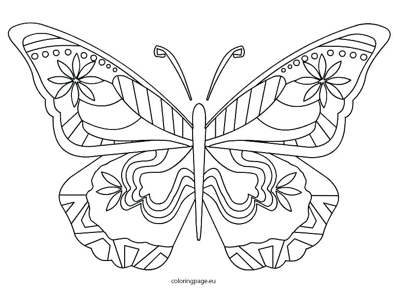 808x595 Butterfly Color Pages And Butterfly Outline Coloring Pages Free