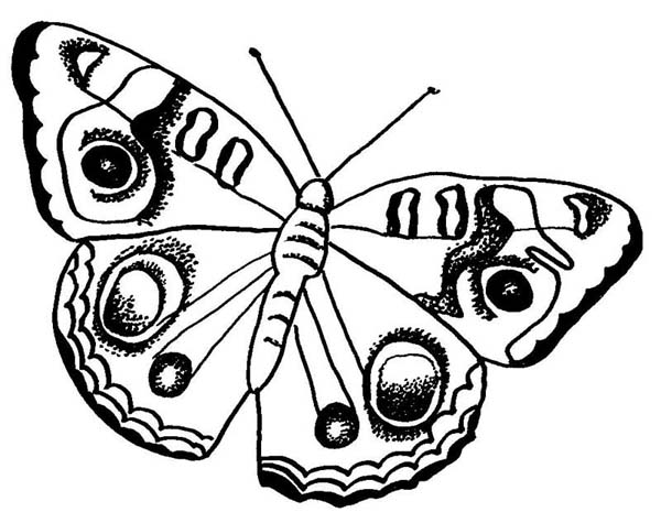 600x475 Butterfly With Rounded Pattern Wings Coloring Page
