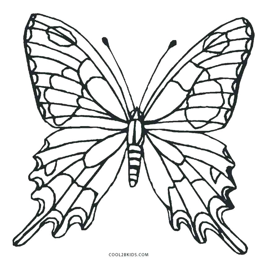 850x835 Coloring Page Of Butterfly Butterfly Wings Coloring Pages
