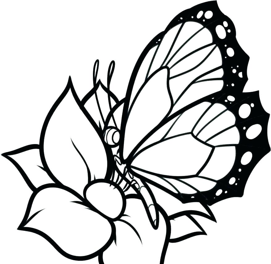 Butterfly Wings Coloring Pages At GetDrawings
