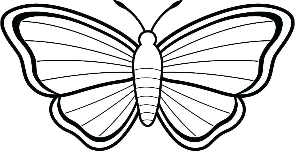 1024x524 Butterfly Wings Coloring Pages Butterflies Coloring Page Butterfly