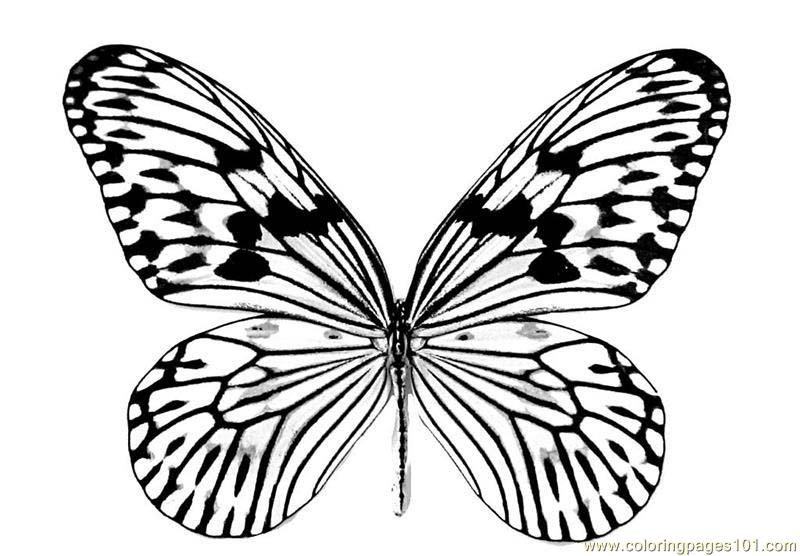 Butterfly Wings Coloring Pages at GetDrawings.com | Free for ...