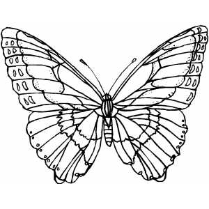 300x300 Butterfly With Wide Wings Coloring Page