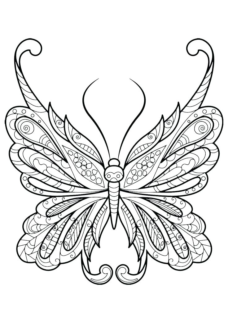 736x1040 Butterfly Picture Coloring Page Best Pictures To Color Ideas