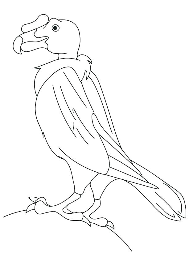 Buzzard Coloring Page at GetDrawings.com | Free for personal ...