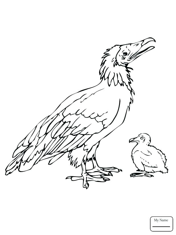 618x824 Vulture Coloring Pages Coloring Trend Medium Size V Is For Vulture