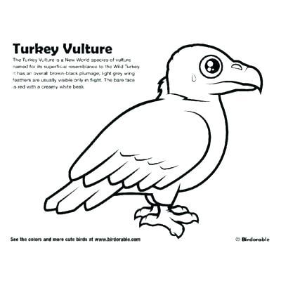 400x400 Vulture Coloring Pages Vulture Coloring Page Vulture Color Pages
