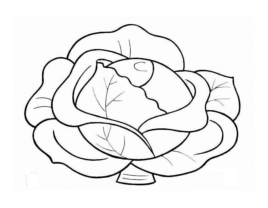900x700 Cabbage Coloring Pages To Download And Print For Free