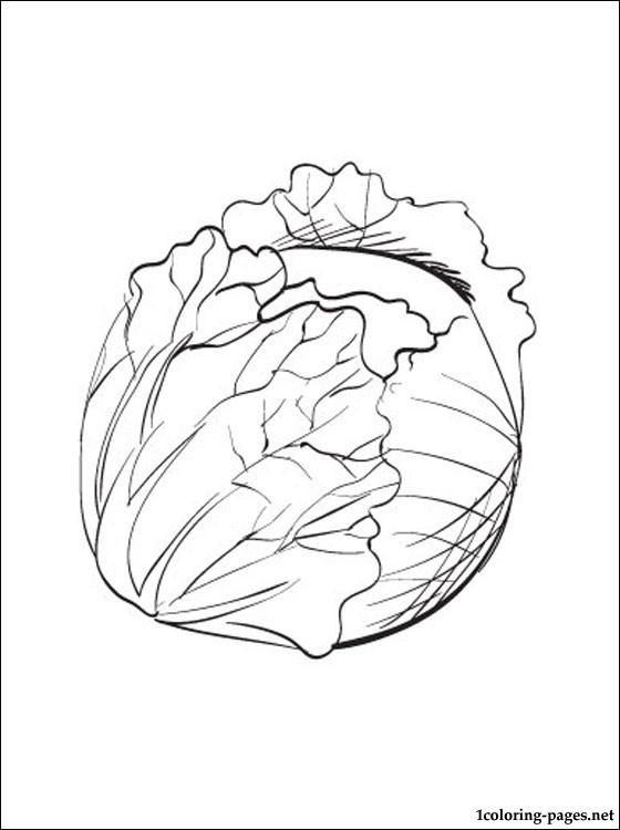 560x750 Cabbage Printable And Coloring Page Coloring Pages