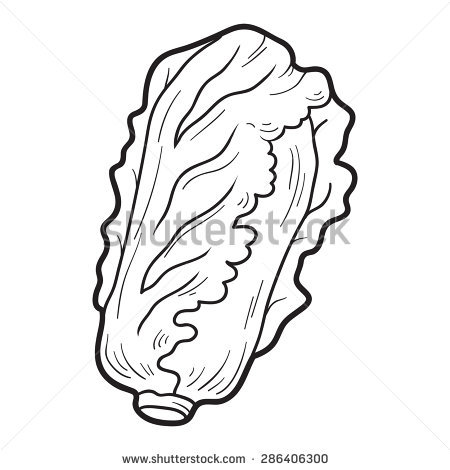450x470 Chinese Cabbage Coloring Pages