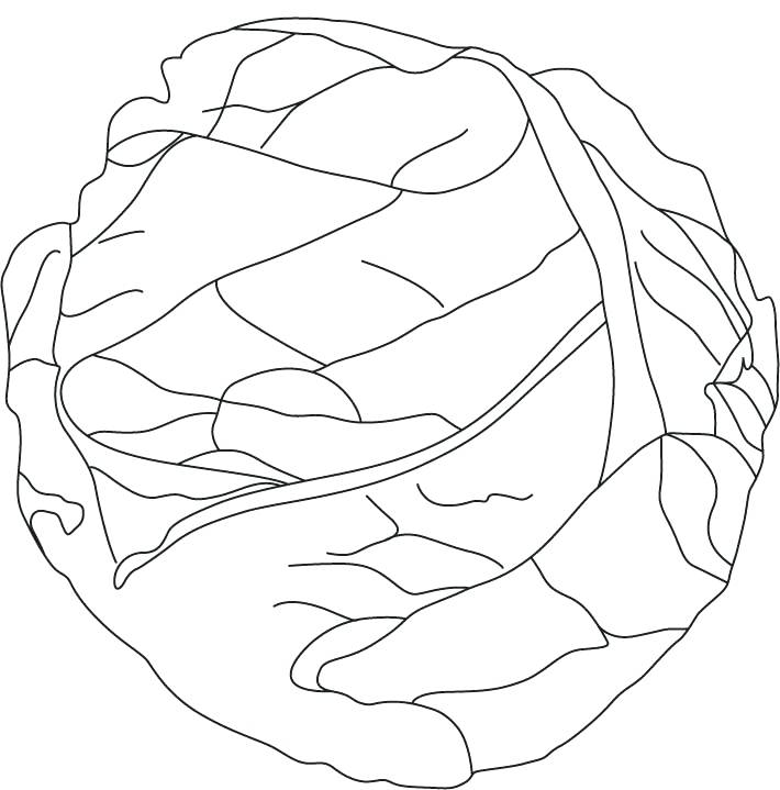 710x719 Lettuce Coloring Page Green Cabbage Coloring Page Lettuce Leaf