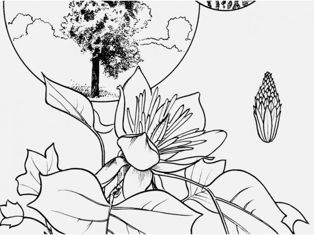 640x480 Palm Tree Coloring Pages Images Cabbage Palm Tree Coloring Page