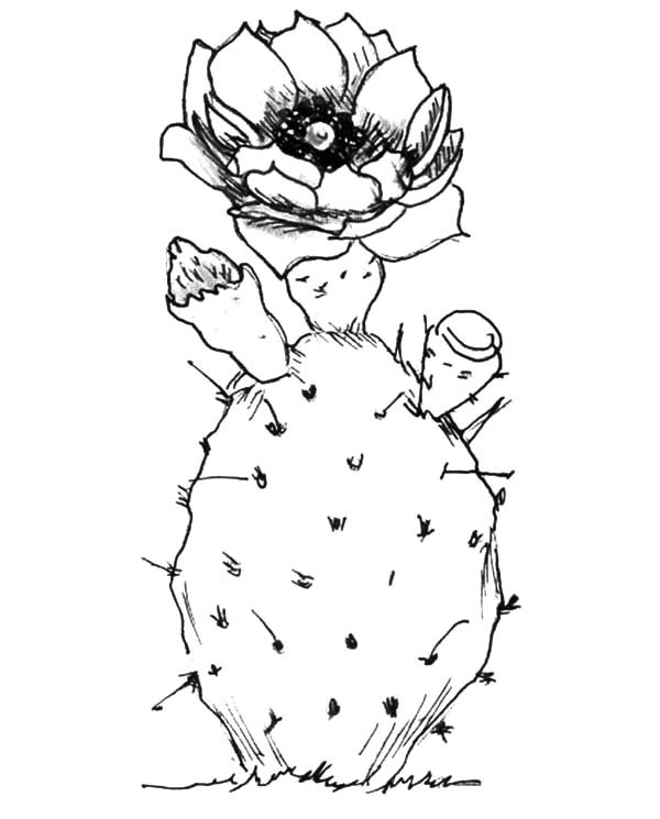 600x745 Planting Cactus Coloring Pages Best Place To Color