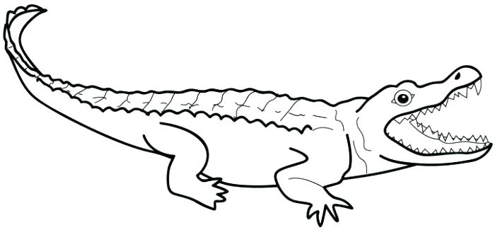 700x325 Caiman Animal Coloring Pages Alligator Color Printable Alligator