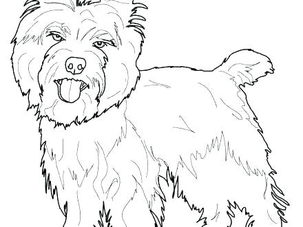 440x330 Coloring Pages Coloring Pages Terrier Page For Color Cairn Terrier