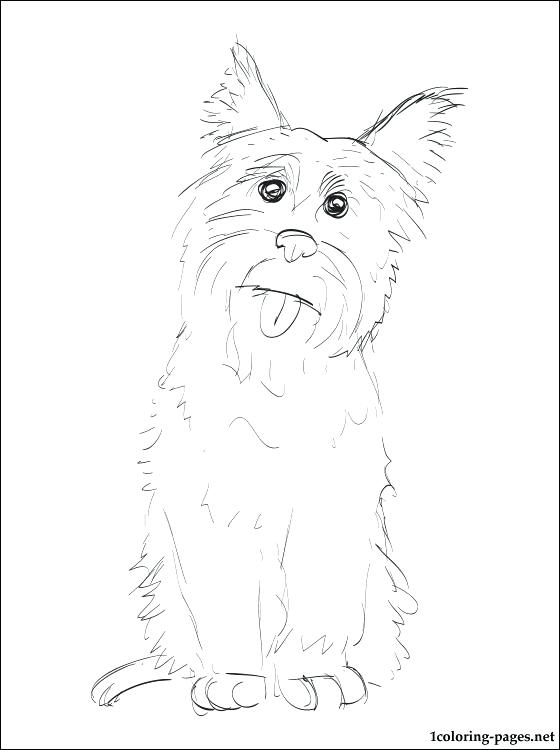 560x750 Coloring Pages Pdf Free Download Cairn Terrier Page