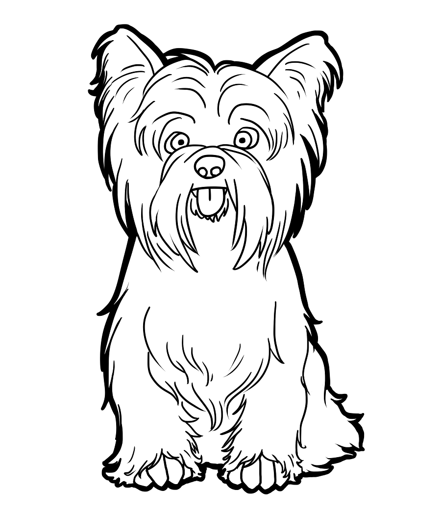 900x1050 Last Minute Cairn Terrier Coloring Pages Jack