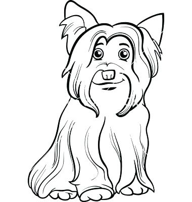 380x400 Terrier Coloring Pages Teacup Yorkie Coloring Pages