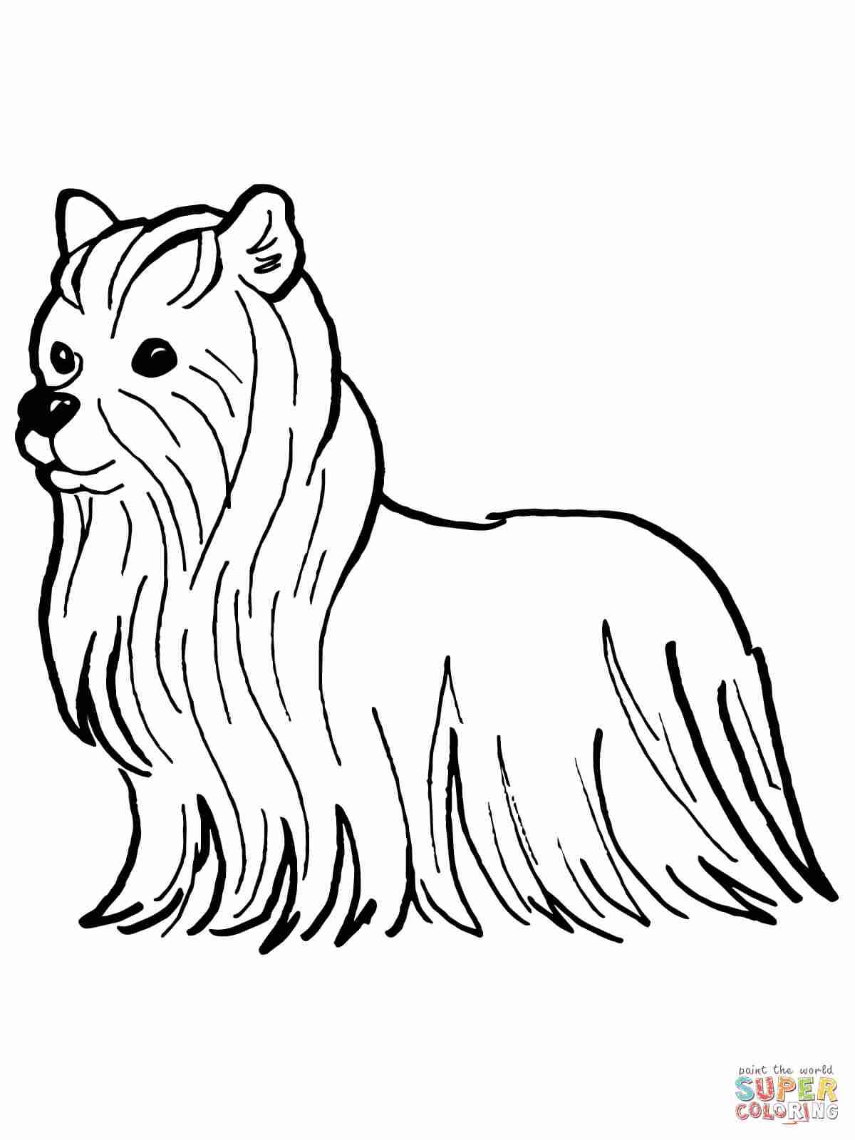 1200x1600 Yorkshire Terrier Coloring Page Free Printable Pages And Yorkie