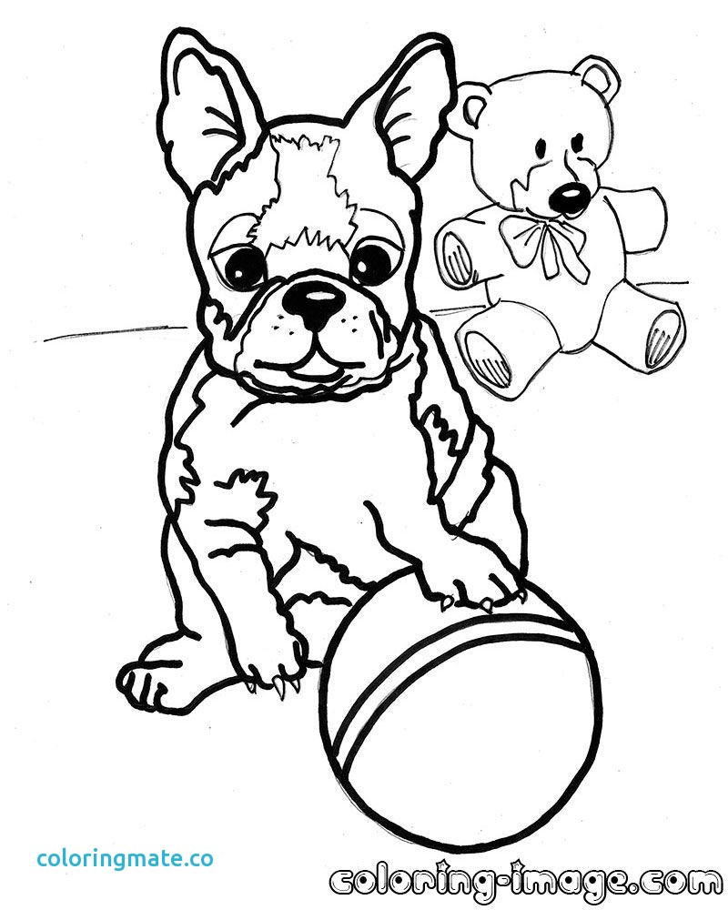 800x1000 Boston Terrier Coloring Page