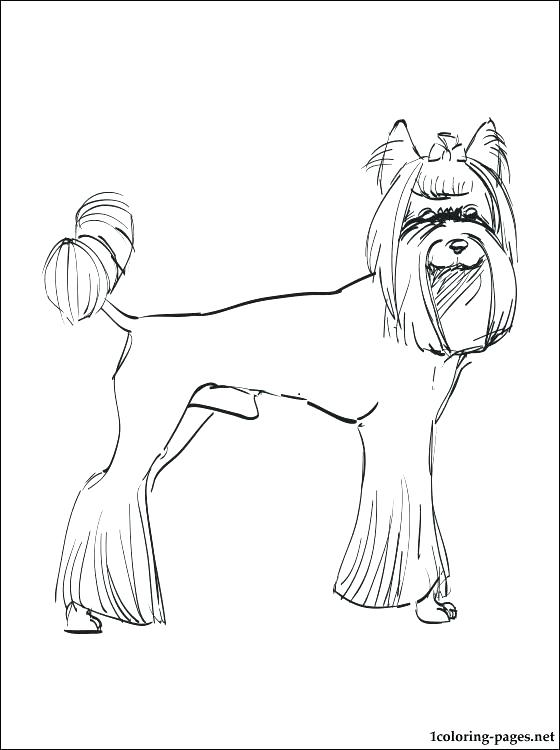 560x750 Yorkshire Terrier Coloring Pages Yorkshire Terrier Colouring