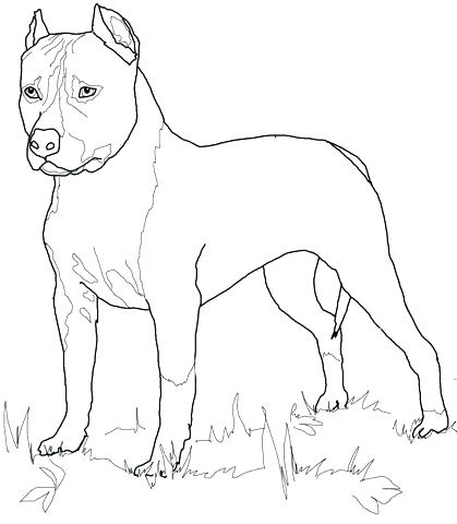 419x480 Boston Terrier Colouring Page