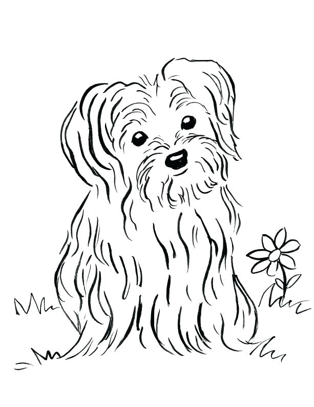 613x794 Cairn Terrier Coloring Pages
