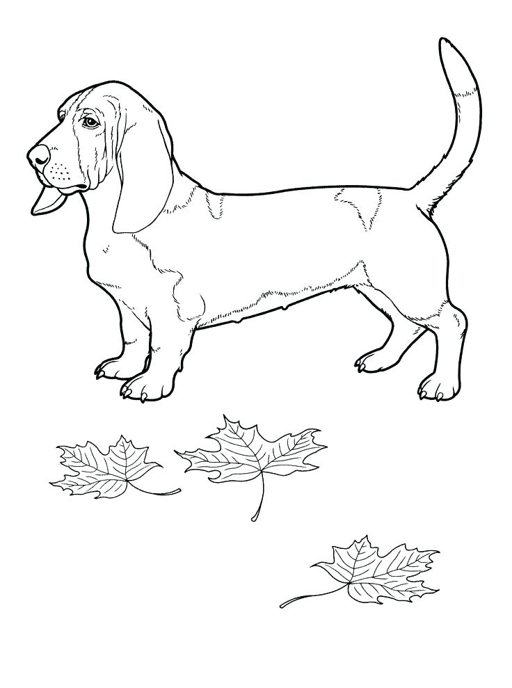 736x989 Boston Terrier Colouring Page Together With Terrier Coloring Page