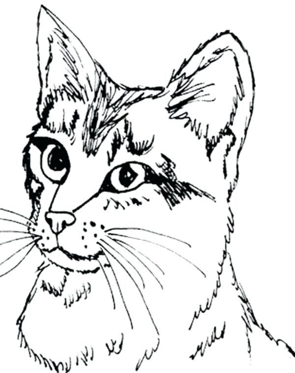 600x757 Tabby Cat Coloring Pages Calico Cat Coloring Sheets Coloring Pages
