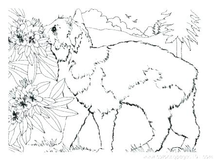 440x330 Tabby Cat Coloring Pages Cat Coloring Page Cat Coloring Pages Cats