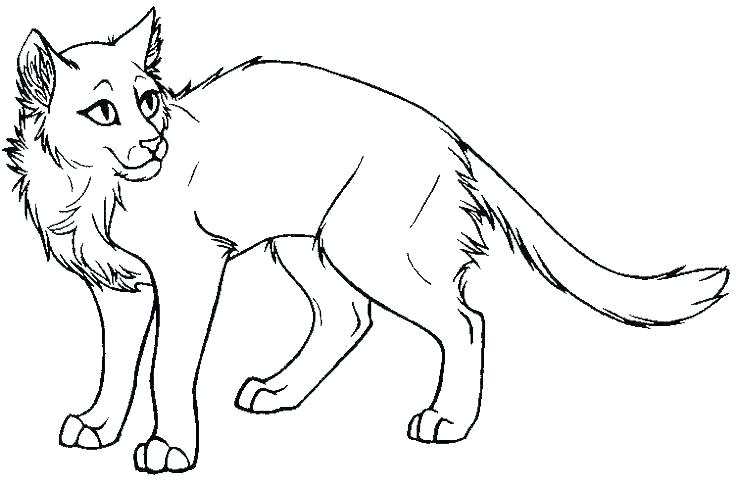 736x487 Tabby Cat Coloring Pages Coloring Cat Coloring Pages Printable