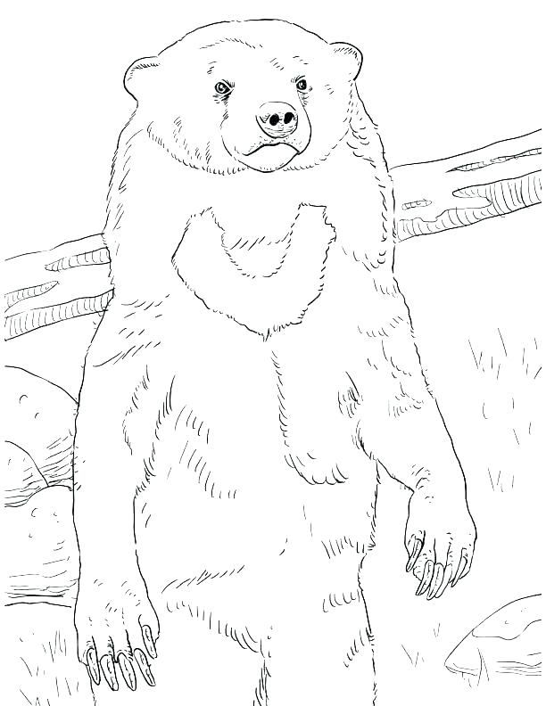 612x792 Grizzly Bear Coloring Pages Grizzly Bear Coloring Pages Grizzly