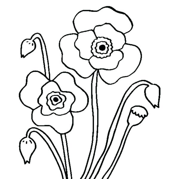 600x600 Poppy Coloring Page Coloring Page Poppy Nature Printable Coloring
