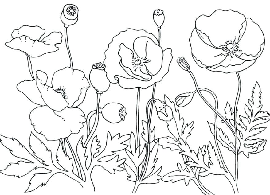 879x635 Poppy Coloring Page Poppy Coloring Page Awesome Field Poppies