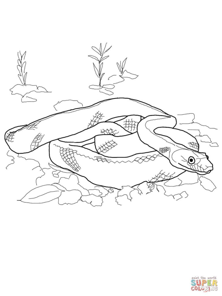 768x1024 Baja California Rat Snake Download Coloring Page