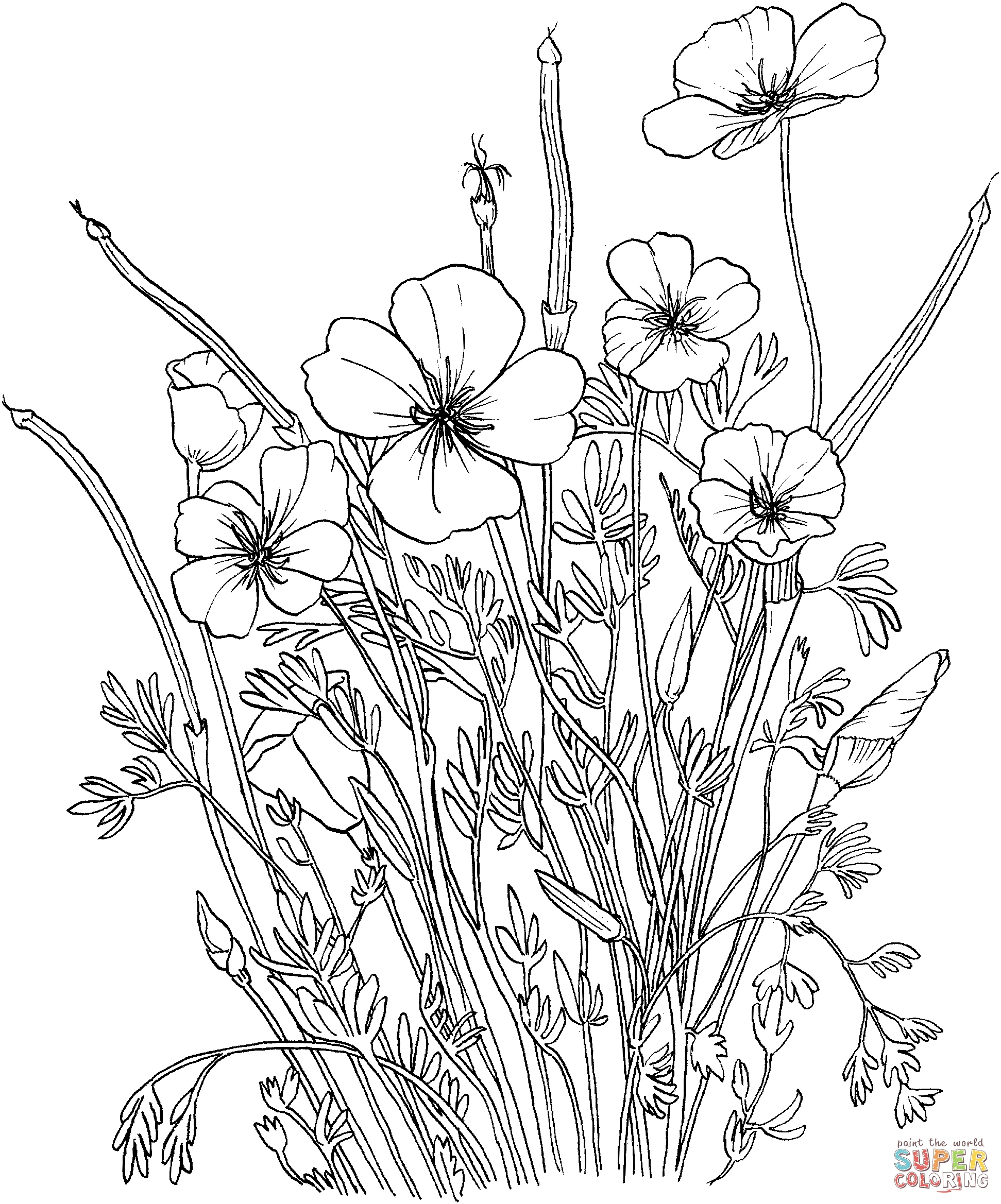 1943x2338 California Coloring Pages Elegant Golden Poppy Or California Poppy