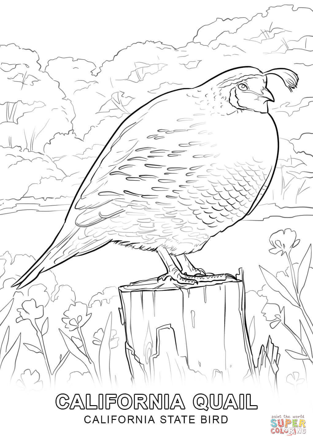 1020x1440 California State Bird Coloring Page Symbols Pages