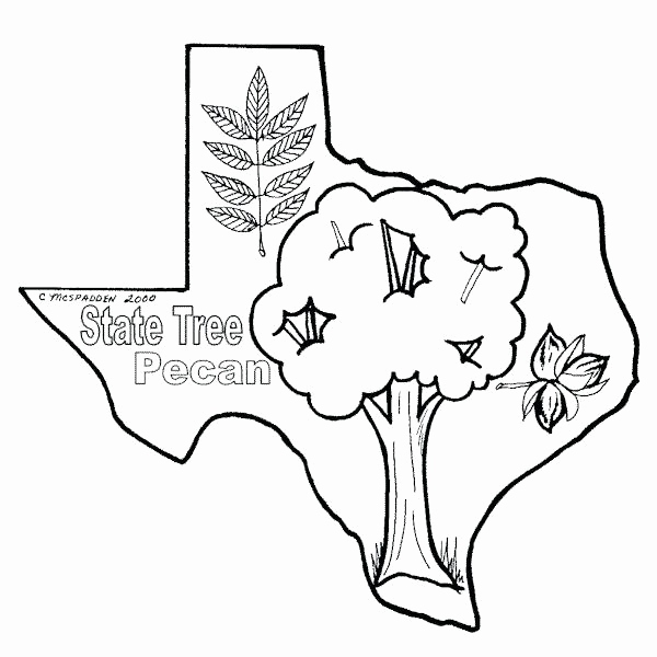 600x600 Coloring Pages Of Texas Flag Gallery California State Symbols