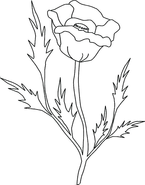 600x768 California Poppy Coloring Page Gold Rush Coloring Pages Gold Rush