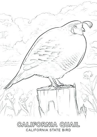 340x480 Q Is For Quail Coloring Page Kids Coloring Bible Alphabet Coloring