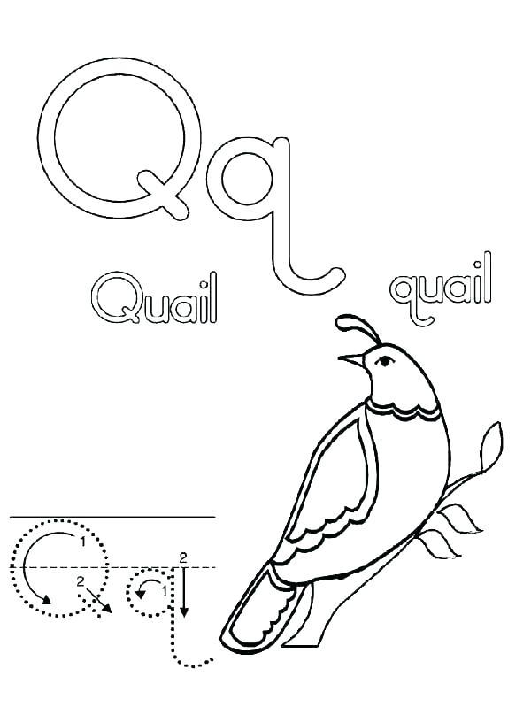 600x799 Quail Coloring Page Coloring Page Quail California Quail Coloring