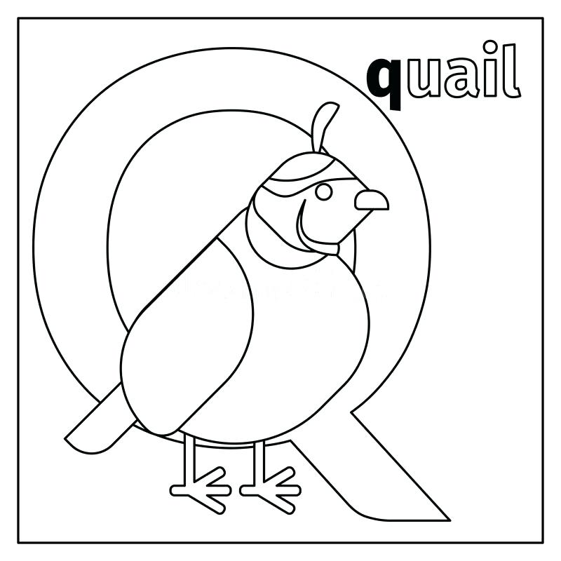 800x800 Quail Coloring Page Download Quail Letter Q Coloring Page Stock